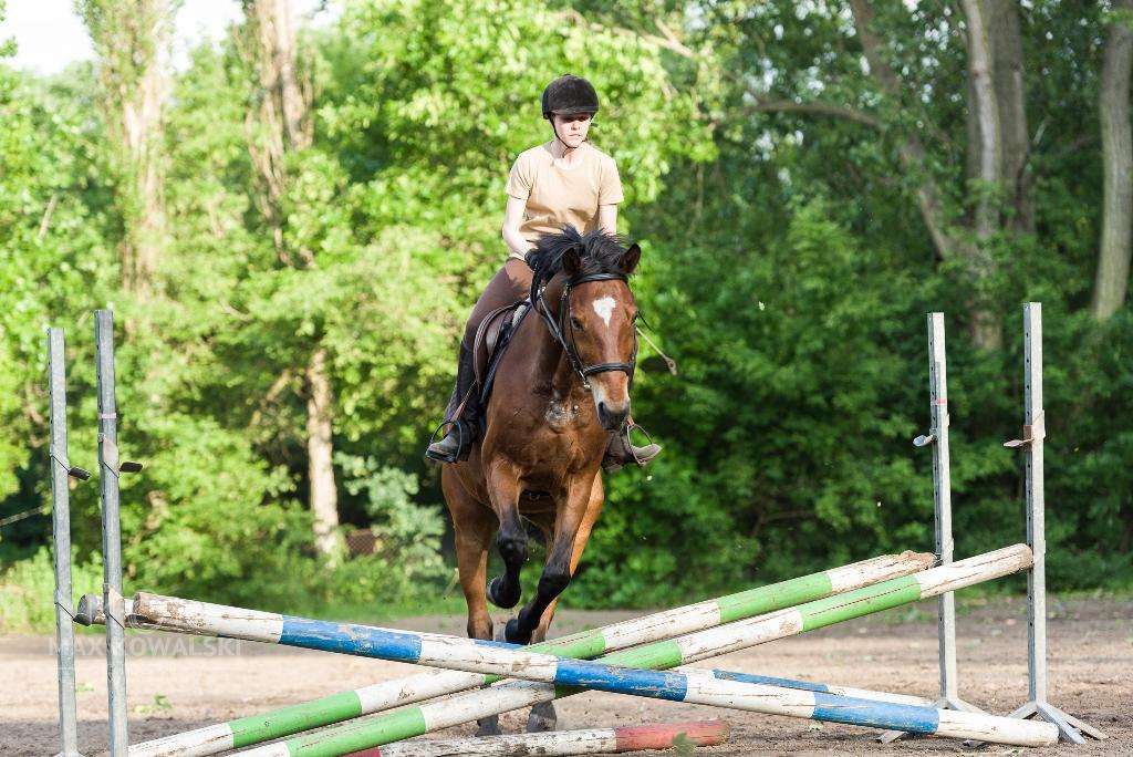 Egzamin na Brązową Odznakę Jeździecką