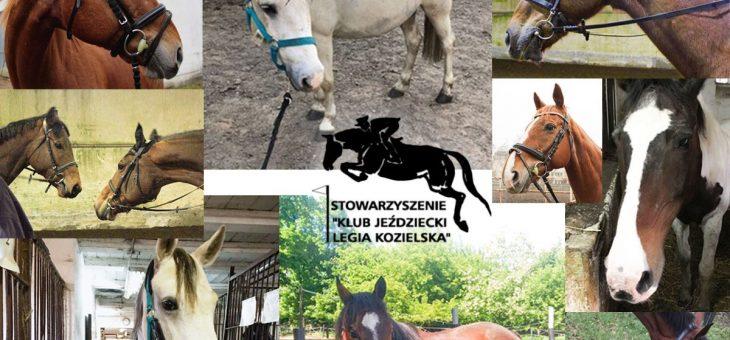 Dziękujemy za wsparcie dla koni, które straciły pracę